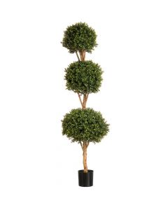 6ft Boxwood Triple Ball Tree