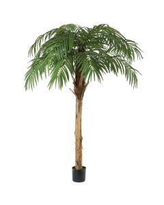 7.5ft Fountain Palm Tree