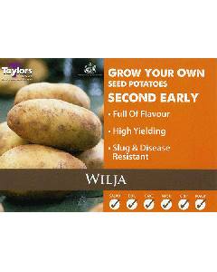 Taylors Bulbs: Wilja 2kg seed Potato's